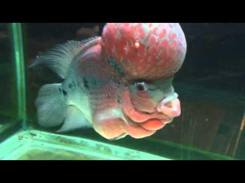 fish brain - photo #5