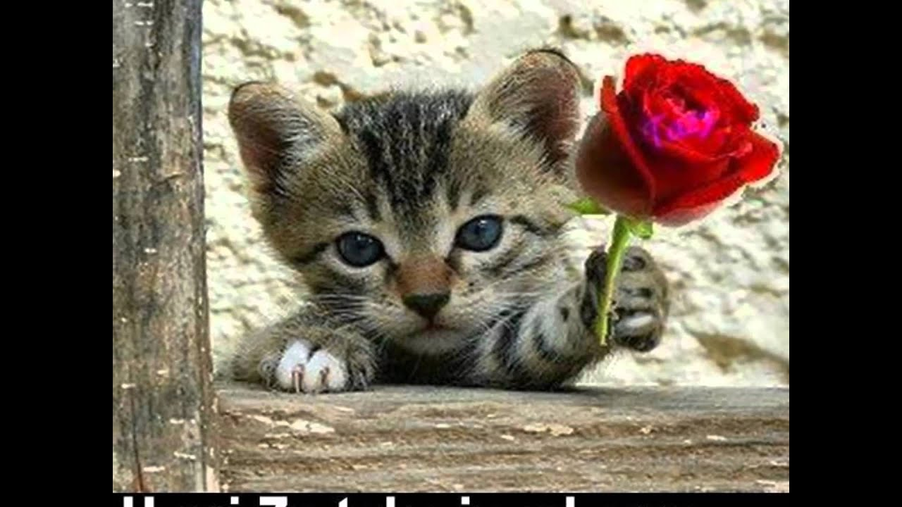 Amazing Pictures Puppies And Roses