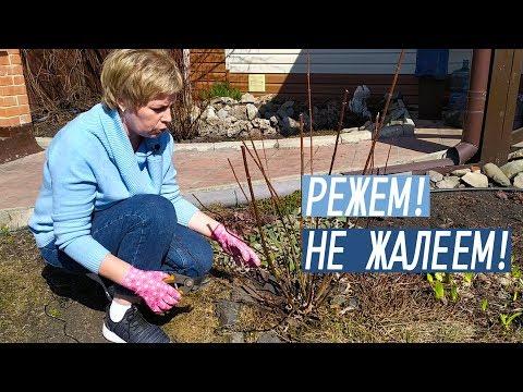 Обрезка метельчатой гортензии весной / Садовый гид