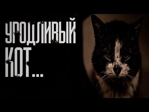 множество аудио запись уродливый кот ближайшее