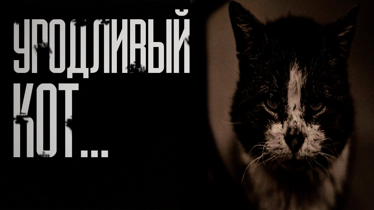 Стих про страшного кота