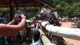 Cheyenne Mountain Zoo Colorado Springs including Giraffe exhibit