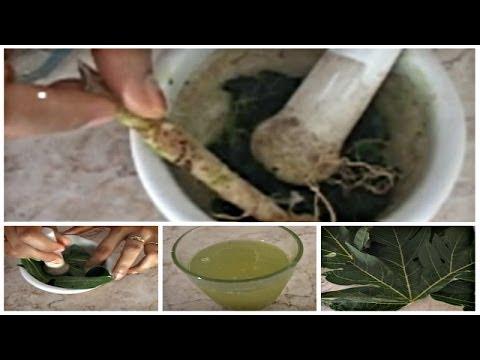 Obat Rematik: Manfaat Daun Pepaya sebagai Obat Herbal Rematik