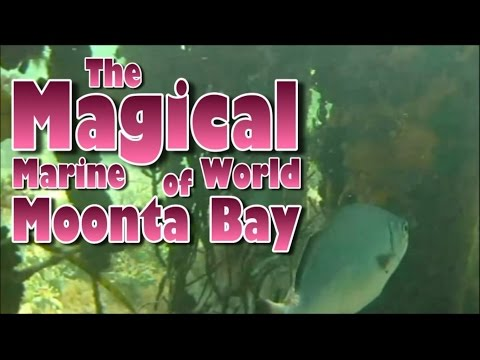 The Magical Marine World Of Moonta Bay, South Australia