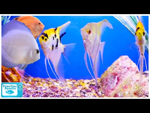 Fish Store Tour - The Fish Factory