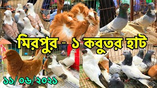 বৃষ্টির মধ্যেও হাট একদম জমজমাট   মিরপুর - ১ কবুতর হাট   Biggest Pigeon Market in Bangladesh (V -281)