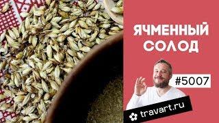Ячменный солод в домашних условиях для выпечки хлеба кваса пива ТРАВАРТ Животворец Андрей Протопопов