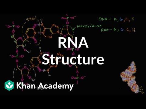 Molecular structure of RNA | Macromolecules | Biology | Khan Academy