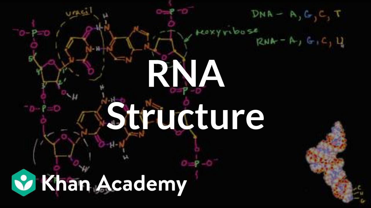 Structural Aspects of Protein Synthesis: 1 (Series in Structural Biology)