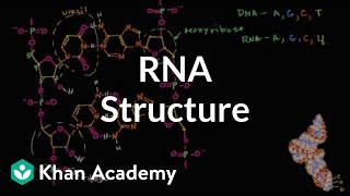 Molecular Structure Of RNA