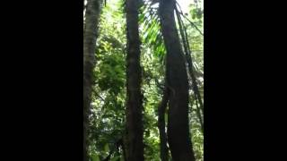 Sonido de animalitos en Comerío Puerto Rico