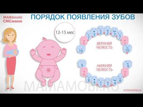 Как выходят зубы у детей по очередности фото