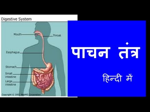 Human Digestive System in Hindi , Urdu...