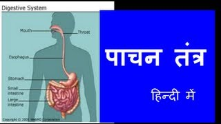 Human Digestive System in Hindi , Urdu (हिन्दी) for children