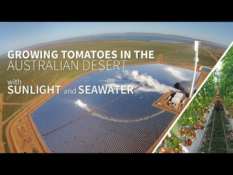 Growing food in the Australian desert with sunlight and seawater - the Sundrop Farms project