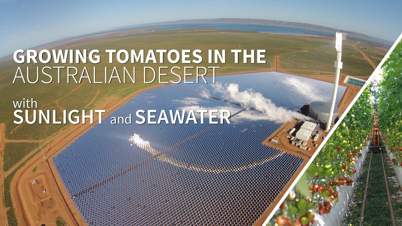 Image result for Seawater Greenhouse australia