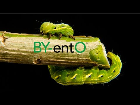 BY-entO - Insects for feed, your future need (ENG_New Business)