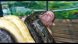 10 Самых Жутких Нападений Змей на Человека
