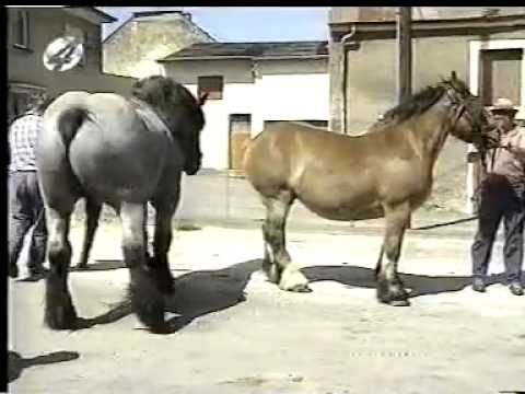 Drafthorse mating mpg - YouTube