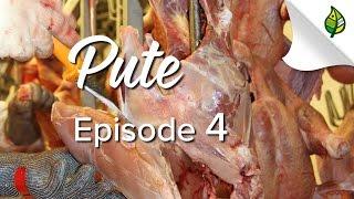 PUTE (4/5) - Ausstallen, Schlachten, Zerlegen (mit Elektrobad-Betäubung)