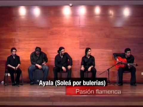 Noches de Flamenco - Pasión Flamenca