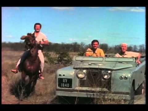 M'Bogo Safari