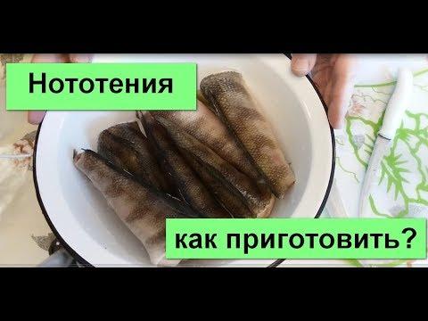 Рыба Нототения  в шубе из кунжута. Секреты приготовления.