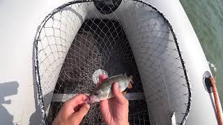 Ловля Окуня на отводной поводок 2021 Спиннинг Лодка Лето Рыбалка