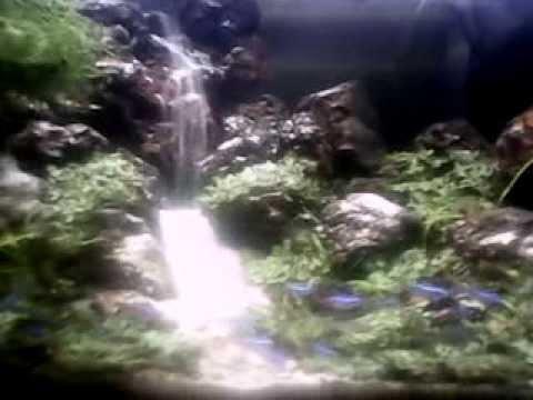 Menanam tumbuhan darat dalam air | FunnyCat.TV