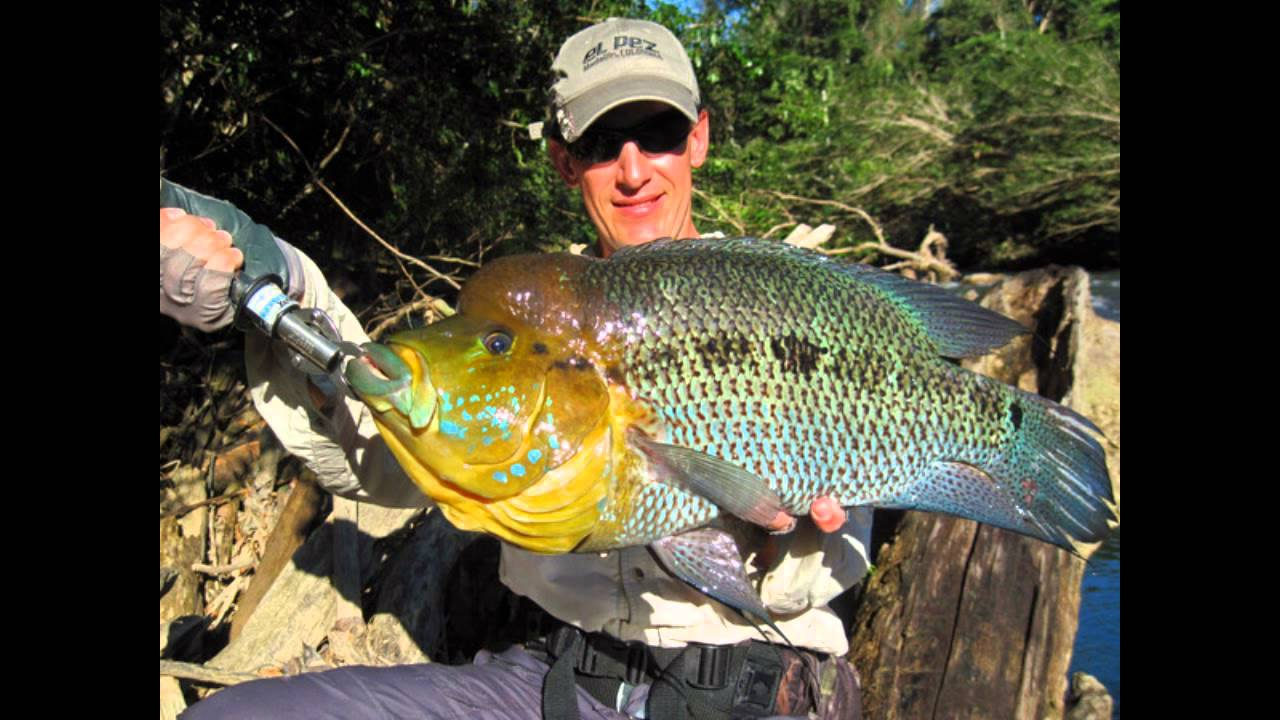 Top 5 aggressive cichlids youtube for Big 5 fishing license
