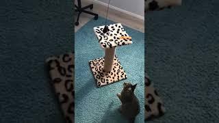 11.10.2018 нашел дом котёнок-мальчик Леший (видео из дома)