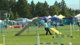 Dizzy & Zappa: Bc Yukon Regional Agility Championships Highlights