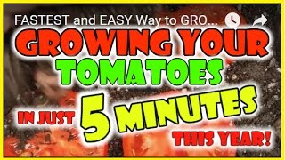 GROW TOMATOES in 5 MINUTES! Did this Garden Hack Work?