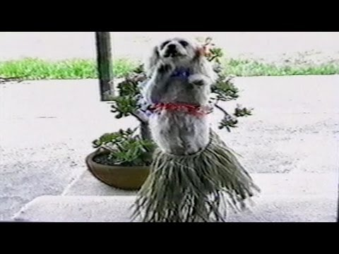 Dancing Animals: Compilation