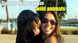 В мире Животных, забавные видео, Арчи и Фреди.Все о наших малых братьях.