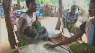 アフリカに緑の革命を! 食糧増産プロジェクト (後編)