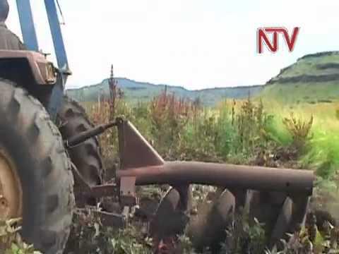 rural living subsistence farming in gauteng south africa stock