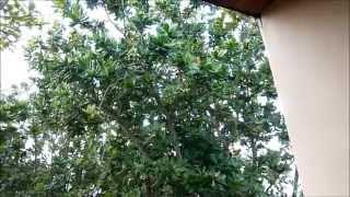 Шри Ланка, Villa Ocean View(Отдых - Шри Ланка (обезьяны Шри Ланки). больше фото - http://vk.com/album5110044_208620706 больше видео - http://vk.com/video?section=album_1., 2015-07-20T20:39:21.000Z)