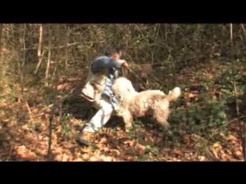 Truffle Hunting In Siena