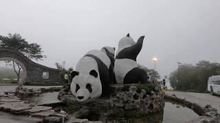 Travel vlog : melihat giant panda at taman safari Indonesia (Cai Tao & Hu Chun)