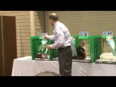 ★Keystone Cat Fanciers Cat Show 3/29/2014(Brian Moser Judge②)