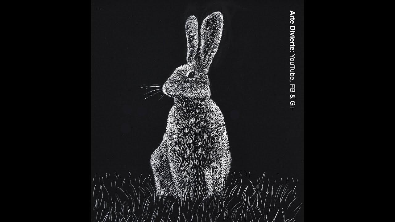 Cómo dibujar una liebre - Conejo - Scratchboard - YouTube
