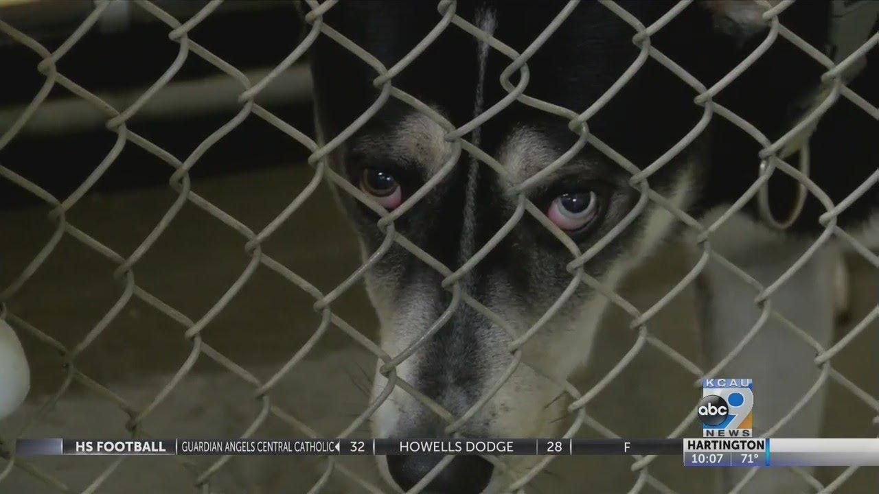 Sioux City animal shelter at full capacity