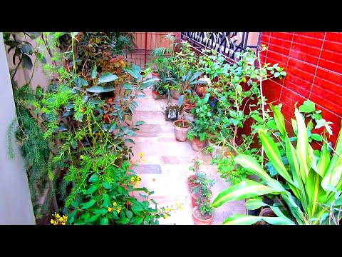 How Money Can Be Saved By Doing This In Your Garden   Budget Gardening   My Hobbshop
