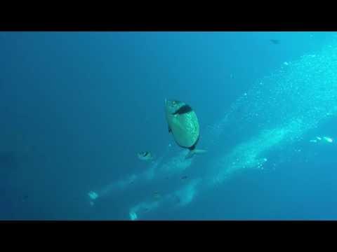 SCUBA - Zenobia Shipwreck Cyprus 5 August 2016
