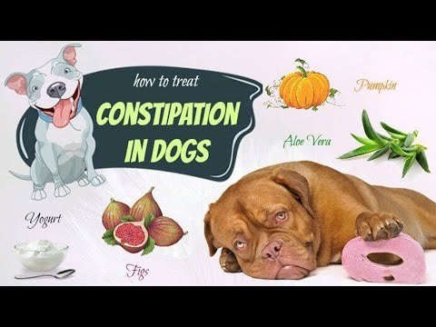 how-to-get-rid-of-constipation-in-dogs-at-home-||-how-to-treat-constipation-in-dogs