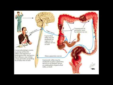 Constipation and the Colon Mayo Clinic