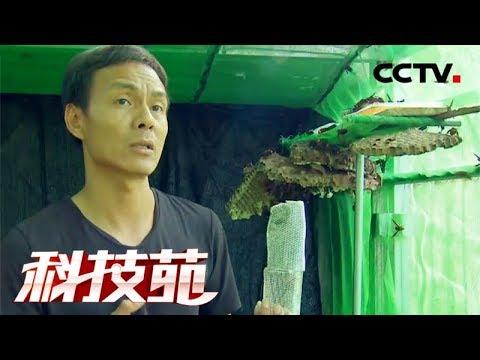 """《科技苑》 20171206 菜地请来""""杀人蜂""""   CCTV农业"""