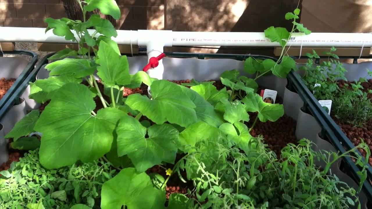 Aquaponics in arizona pt 3 ph levels and the for Arizona aquaponics