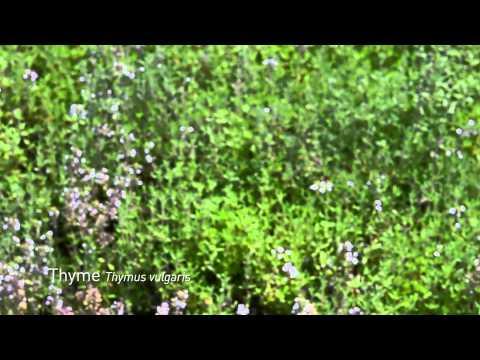 Gaia Herbs: Global Sourcing - Prince of Lowenstein